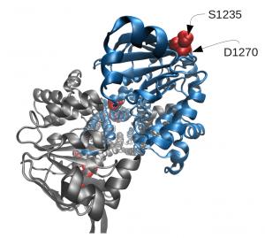 Modelo de CFTR obtenido en el trabajo, en el que se muestran algunas de las mutaciones identificadas. Imagen: http://www.plosgenetics.org/article/info:doi/10.1371/journal.pgen.1004376