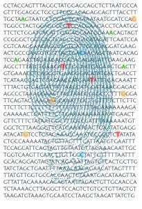 Identificación de individuos mediante el análisis del ADN. Imagen: A.Tolosa (MedigenePress SL)