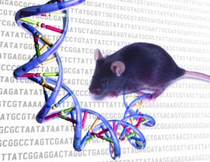 Proyecto del ENCODE de ratón-. Enciclopedia de Elementos de ADN. Imagen: Darryl Leja, National Human Genome Research Institute (National Institute of Health)