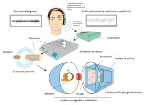 ondas cerebrales. Imagen: Folcher M, et al. Mind-controlled transgene expression by a wireless-powered optogenetic designer cell implant. Nat Communications. 2014 Nov 11. Doi: 10.1038/ncomms6392