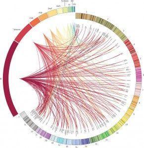 Diagnósticos genéticos individuales asociados con las características fenotípicas catalogadas en bases de datos de desórdenes del desarrollo. Las líneas unen la localización genómica de cada gen con los fenotipos de cada niño. (Wright CF, et al. Genetic diagnosis of developmental disorders in the DDD study: a scalable analysis of genome-wide research data. The Lancet. 2014. Doi: 10.1016/S0140-6736(14)61705-0)