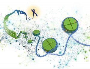 envejecimiento prematuro. Imagen: Darryl Leja, National Human Genome Research institute (www.genome.gov)