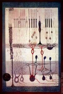acromatopsia. Imagen: Instituto Cajal, CSIC, Madrid