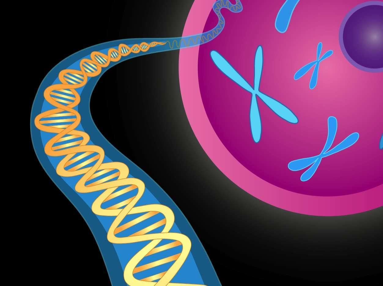 Diferentes condiciones autoinmunes comparten parte de su predisposición genética. Imagen: National Institute of Mental Health (EEUU)