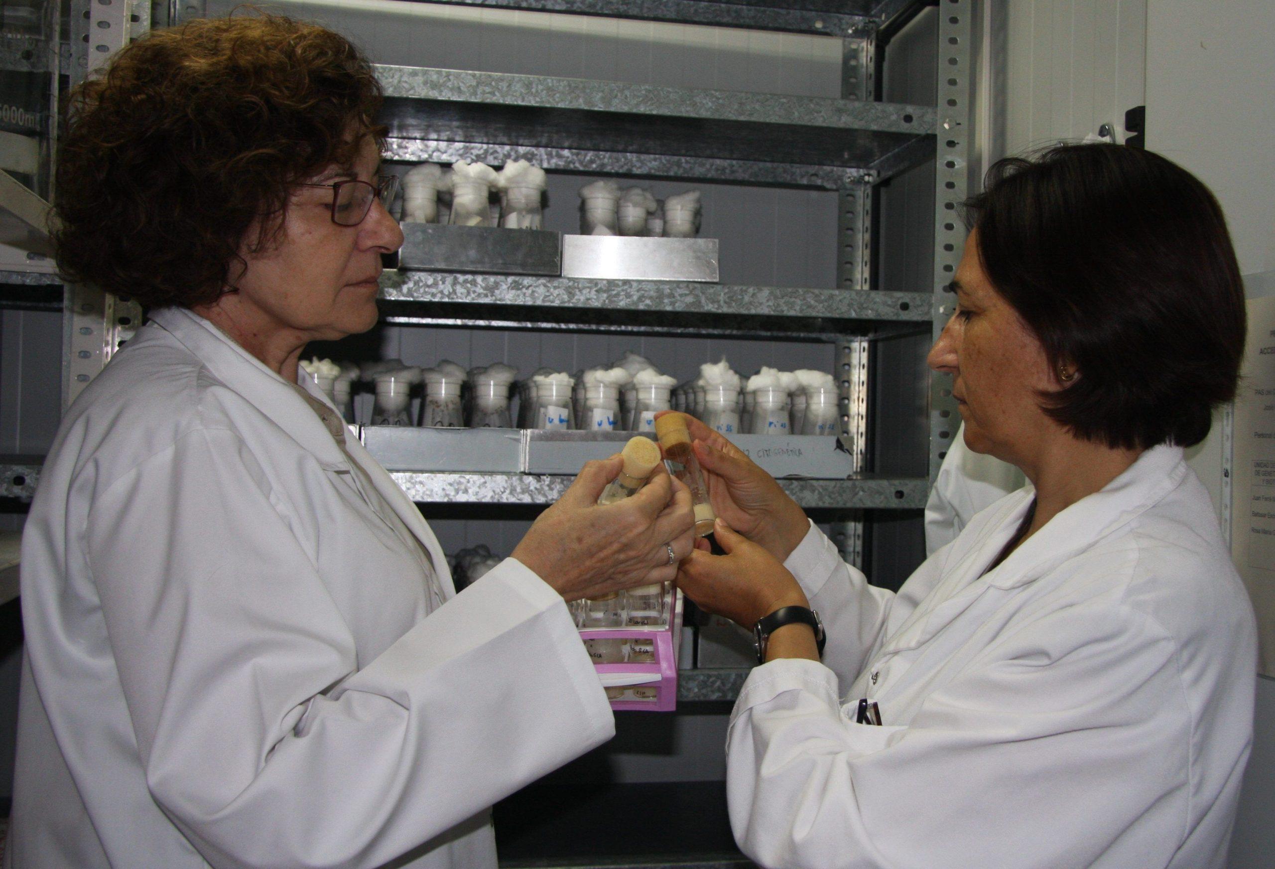 El equipo de investigación de María Dolores Moltó ha desarrollado varios modelos de Ataxia de Friedreich en Drosophila. En la imagen se muestra la cámara donde se mantienen las líneas de moscas. Fotografía: Lucía Márquez, Medigene Press S.L..