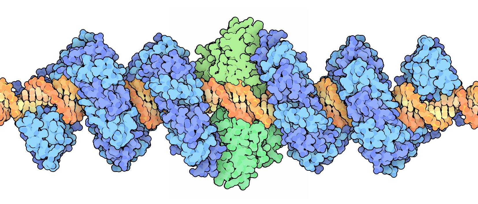 Componentes del sistema TALENs de edición del genoma sobre la cadena de ADN que reconocen de forma específica. Imagen: By David Goodsell (RCSB PDB Molecule of the Month) [CC BY 3.0 (http://creativecommons.org/licenses/by/3.0)].