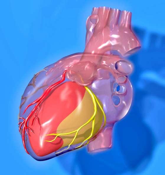 microARNs. Imagen: Territorios del corazón, Patrick J. Lynch, ilustrador médico, [CC-BY-2.5 (http://creativecommons.org/licenses/by/2.5)].