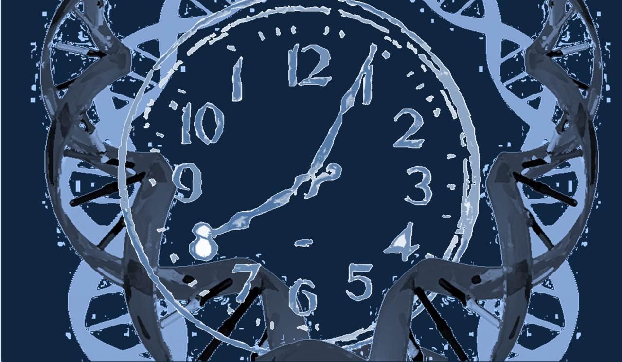 Si un mecanismo da lugar a mutaciones de forma continua a lo largo de la vida, a una tasa constante, la huella generada es equivalente a un reloj molecular, en el que el número de mutaciones se correlacionara con la edad de una persona. Imagen: MedigenePress S.L.