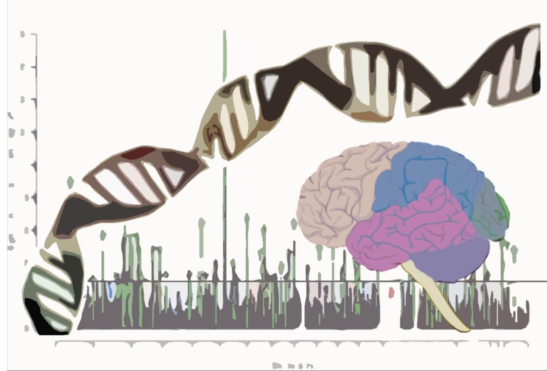 Un estudio ha relacionado por primera vez la variación genética en una región del genoma con un proceso celular implicado y con uno de los desórdenes psiquiátricos más frecuentes, la esquizofrenia.