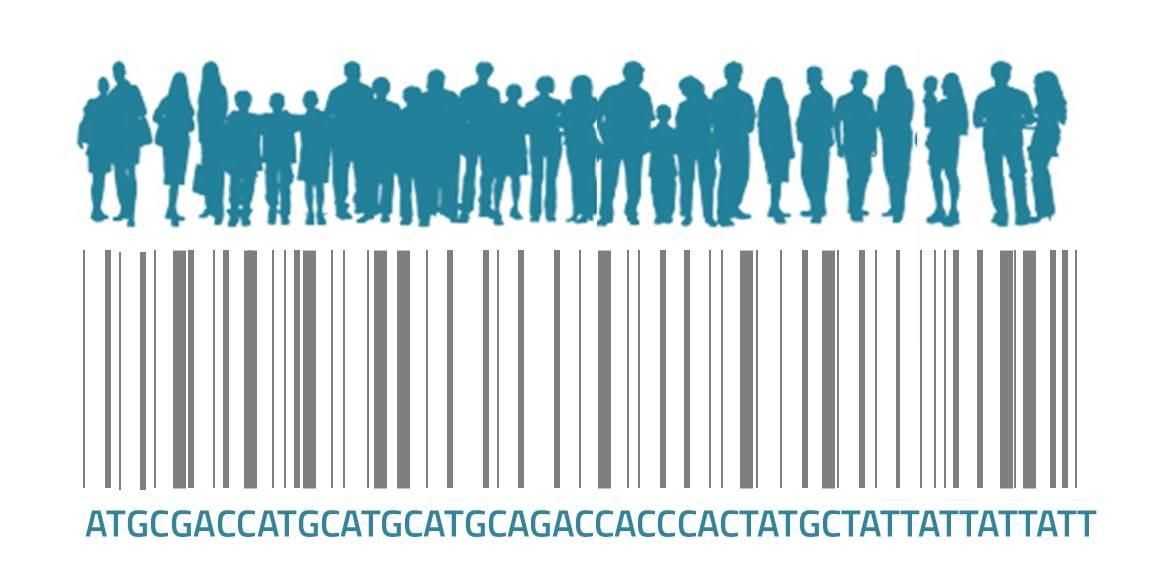 Investigadores españoles han creado el primer catálogo que recoge la variación genética en la población española.Imagen: Medigene Press SL.