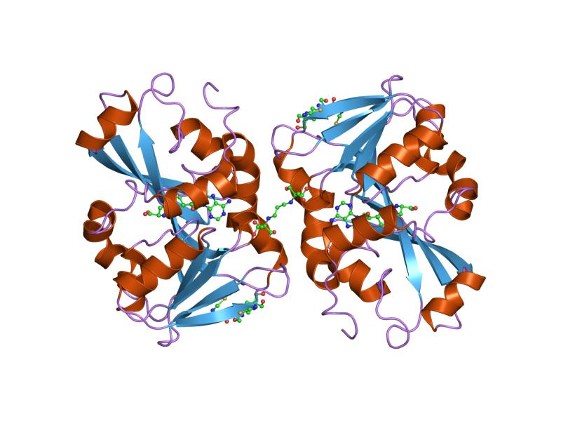 Estructura molecular de la tiopurina metiltransferasa. Imagen: Jawahar Swaminathan y personal MSD, European Bioinformatics Institute.