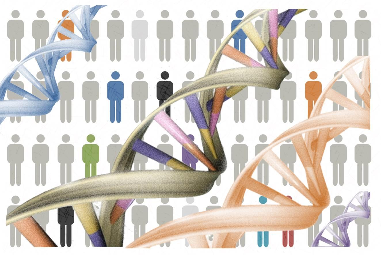 La nutrigenómica estudia cómo la composición genética de un individuo influye en su respuesta a los nutrientes y componentes de los alimentos que ingiere, así como en qué medida los alimentos pueden influir en la expresión génica.Imagen: MedigenePress S.L.