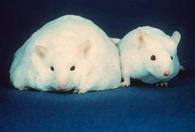El estudio, en el que los ratones obesos mostraban déficits en la memoria asociados a cambios de expresión inducidos por modificaciones epigenéticas, es el primero en establecer conexión entre epigenética, obesidad y memoria.