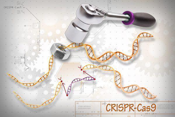 CRISPR en humanos. Imagen: Ernesto del Aguiila, National Human Genome Research Institute (www.genome.gov).