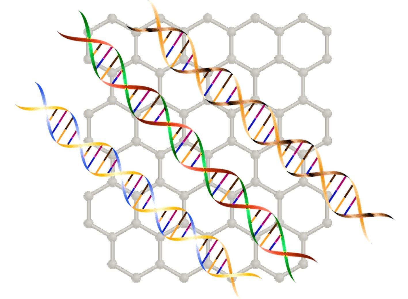 El grafeno llega a la genotipación del ADN. Imagen derivada de Pixabay.