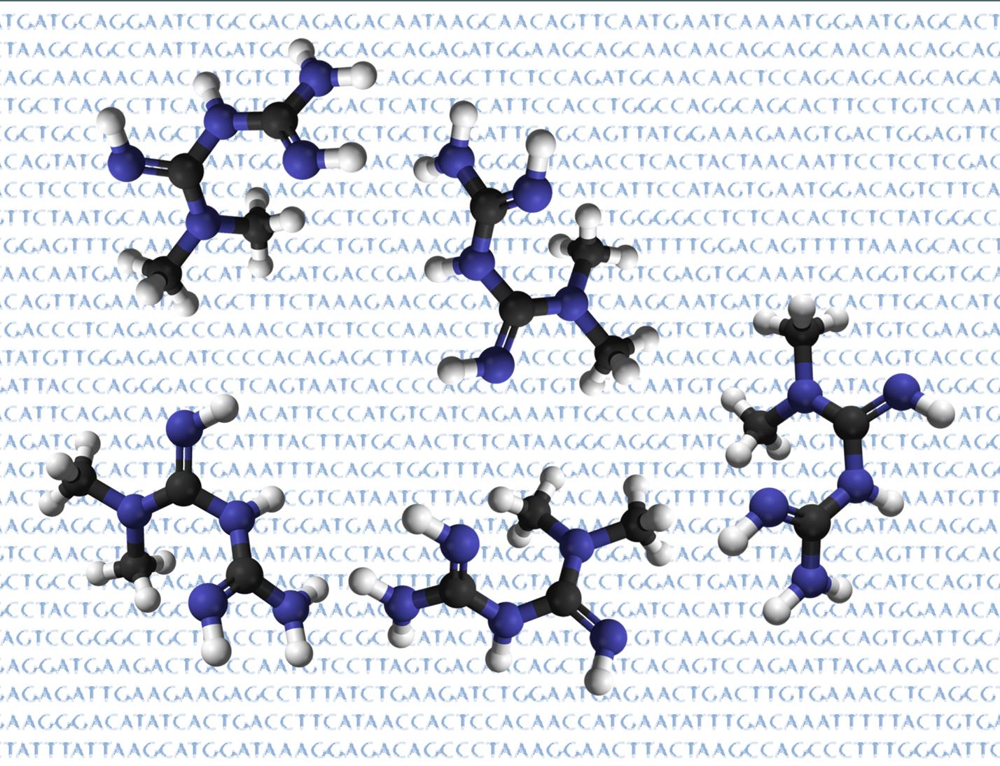 La metformina es uno de los principales fármacos utilizados en el tratamiento de la diabetes tipo 2. Un estudio revela que variaciones en el gen SLCA2A influyen en la respuesta a la metformina.