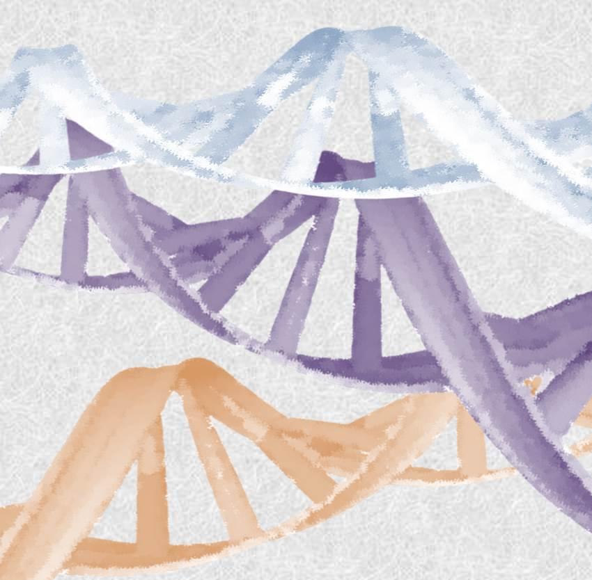 En ausencia de concentraciones óptimas de drogas en un compartimento anatómico, la adquisición de mutaciones no es ventajosa para el virus y, por lo tanto, estos cambios en los genomas son eliminados de la población.