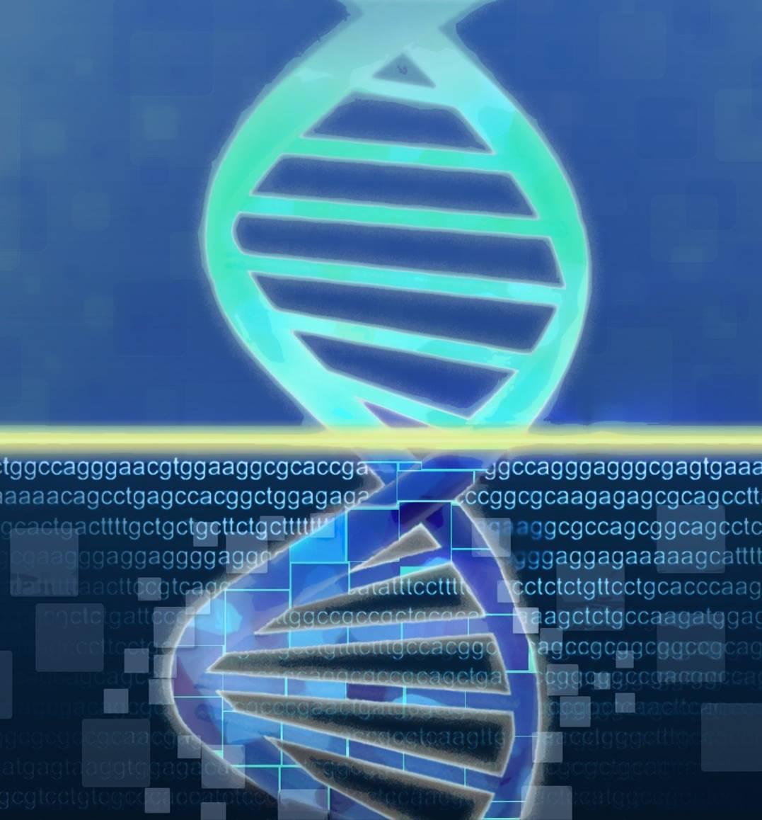 Cada proceso biológico que causa mutaciones deja una huella concreta sobre el material hereditario, que puede ser caracterizada. Imagen: Jonathan Bailey (National Human Genome Research Institute, http://www.genome.gov).