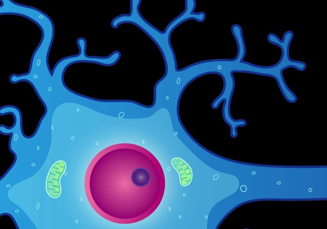 Célula nerviosa. Imagen: National Institute of Mental Health, NIH, EEUU