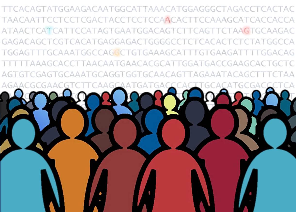 genes y altura