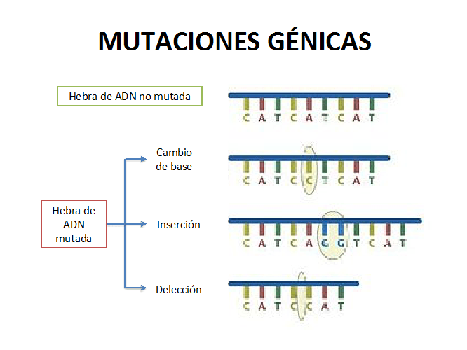 lista de enfermedades hereditarias