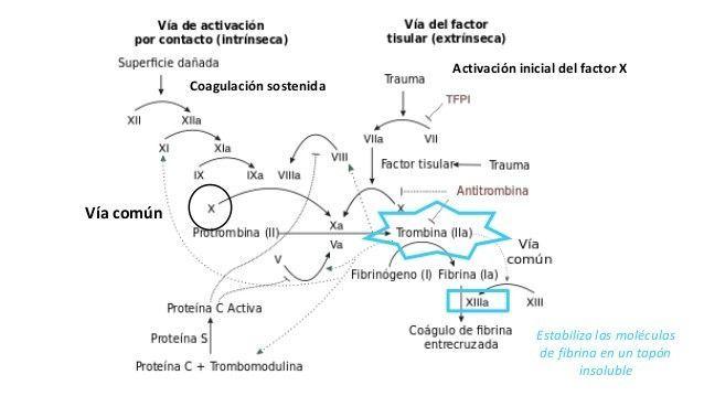 definir un patrón de herencia autosómico dominante para la diabetes