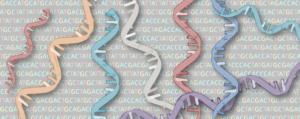 metilación micro-ARNs