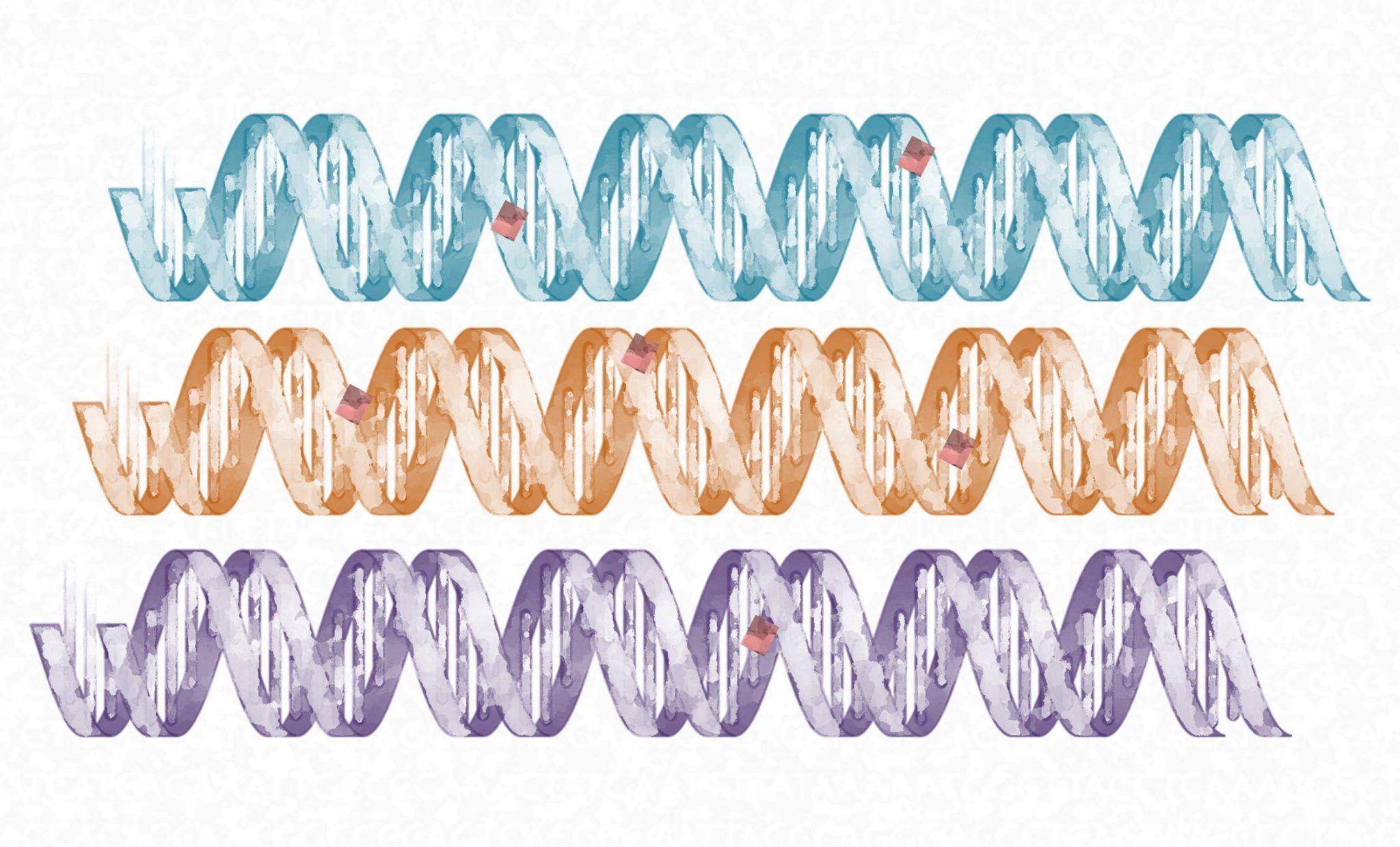 mutaciones colaterales