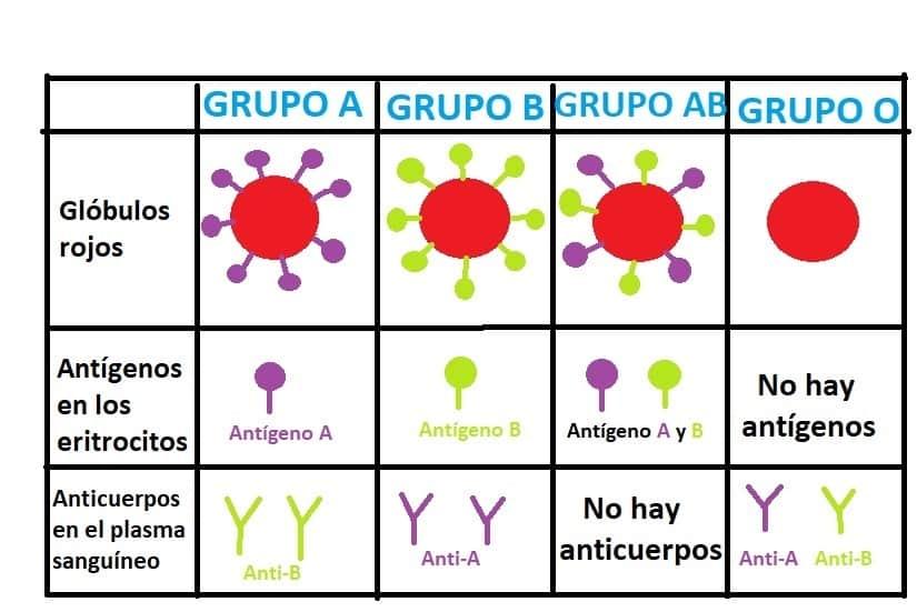 Aprendamos un poco acerca de los grupos sanguíneos - Genotipia