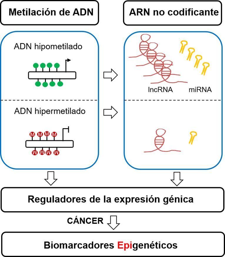 biomarcadores epigenéticos en cáncer