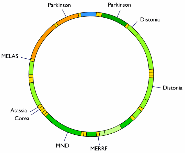 Una Célula Dentro De Tu Célula La Mitocondria Genotipia