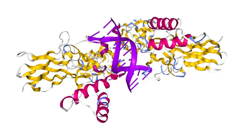 temperatura y genes
