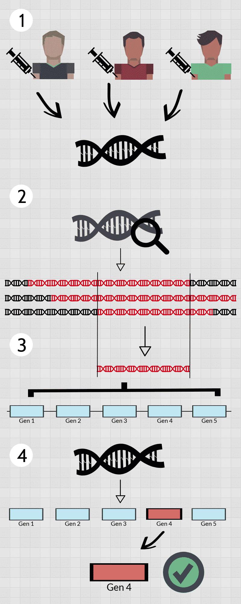 Identificación de genes