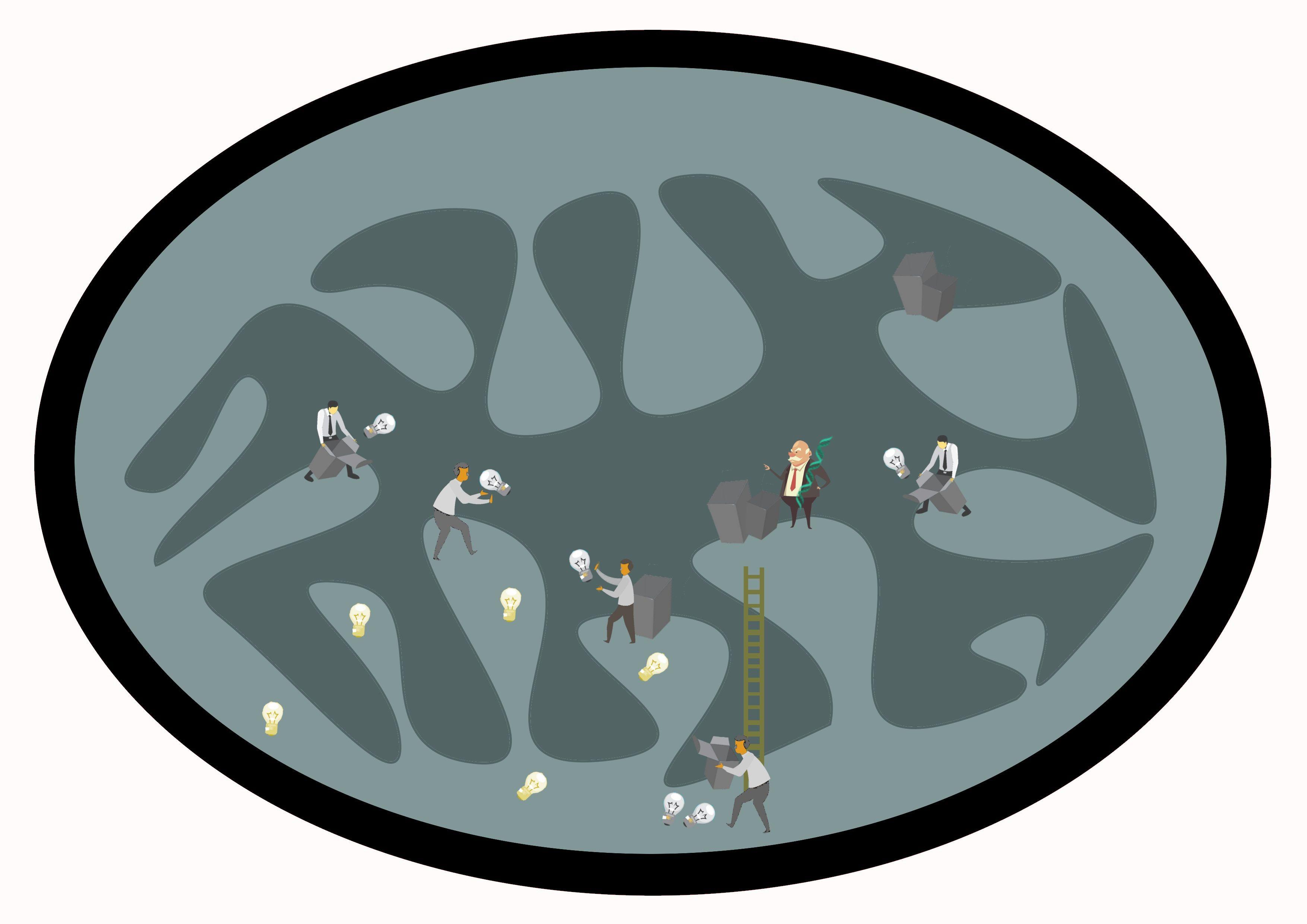 ADN mitocondria