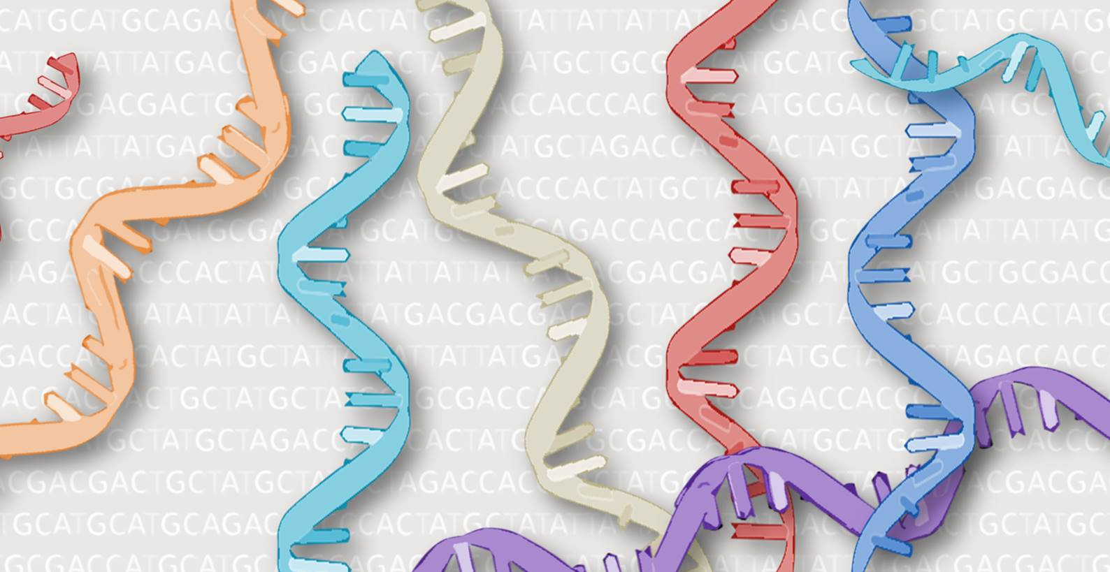 ARNS preeclampsia