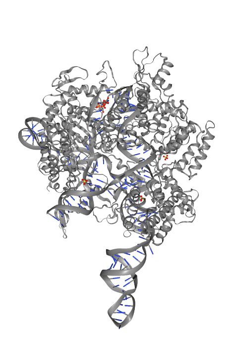 CRISPR enfermedades cardiacas