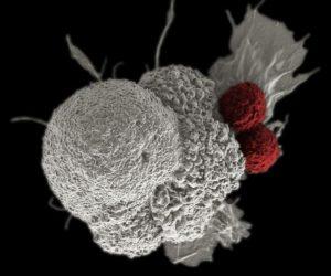 CRISPR cáncer
