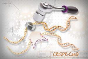 coronavirus CRISPR