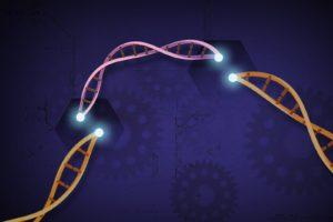 ensayo CRISPR talasemia