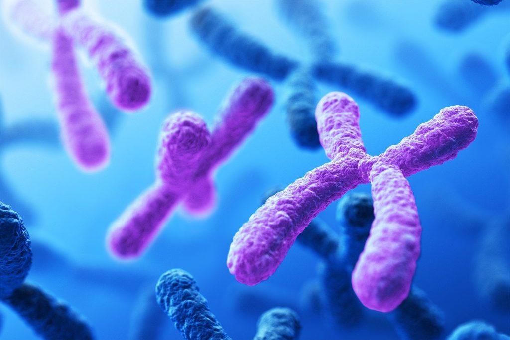 Pruebas prenatales no invasivas: el análisis de los 24 cromosomas podría  detectar el riesgo de complicaciones en el embarazo -