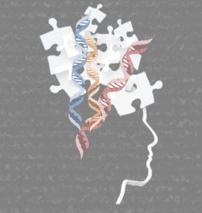 redes génicas espectro autista