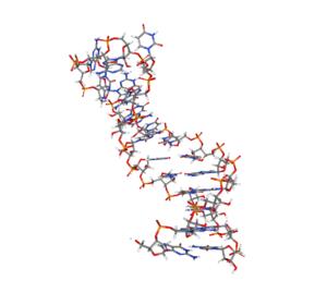 regulación microARNs