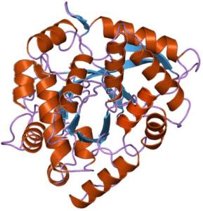 biomarcador celiaquía
