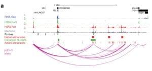 genoma diabetes tipo 2