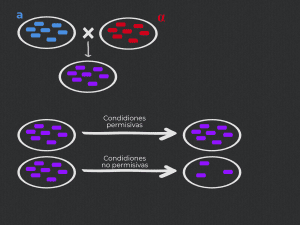 levaduras, experimentos de complementación