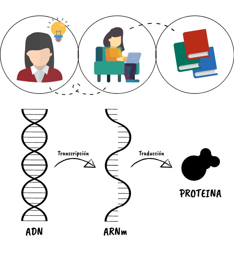 Qué Es El Arn Estructuras Tipos Y Funciones En La Célula