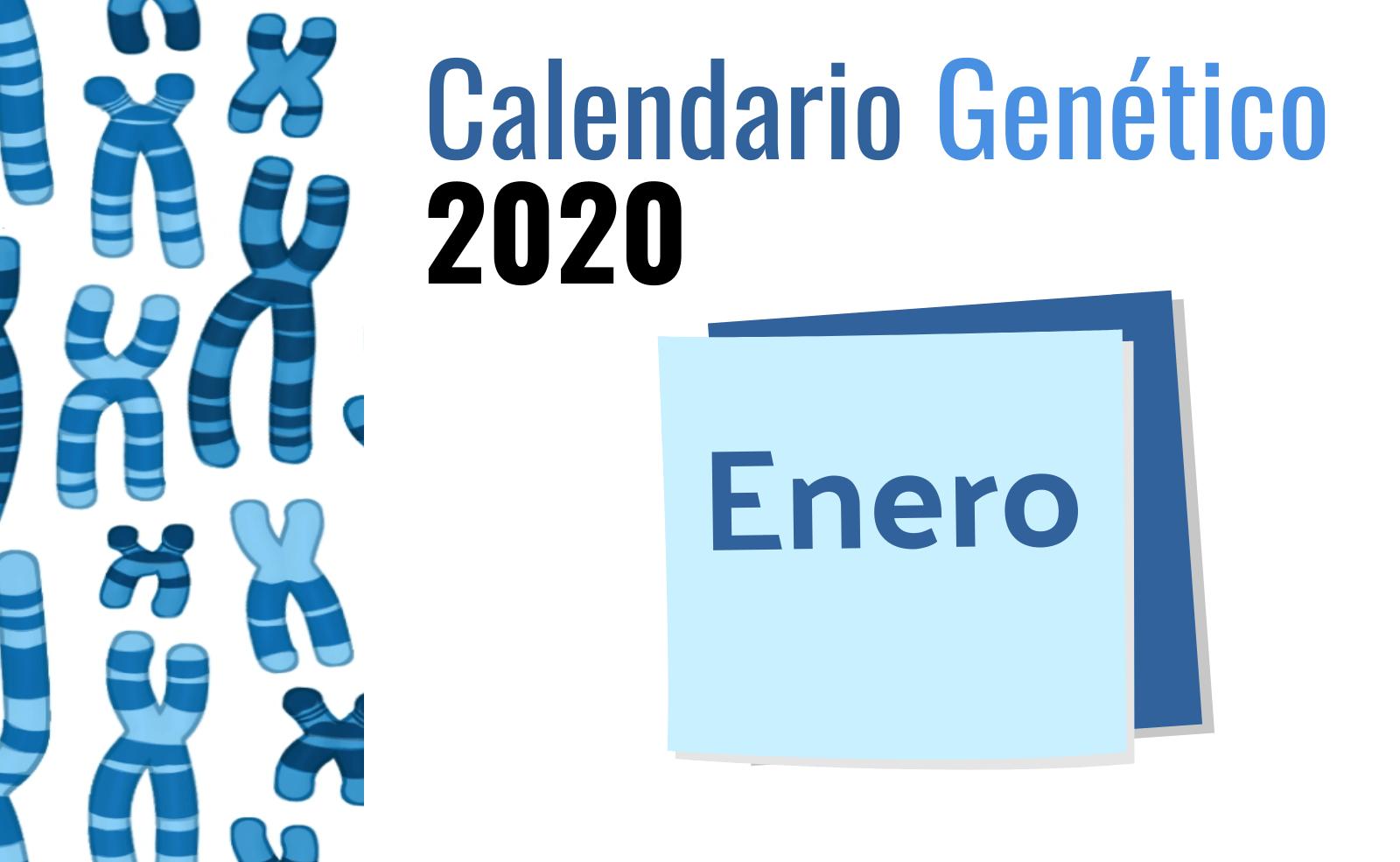 Calendario Genético Enero 2020 Genotipia