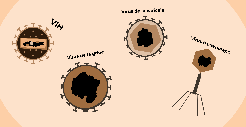 todos los virus causan enfermedades