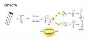 CRISPR COVID-19