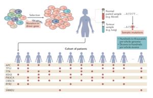 genes inductores cáncer